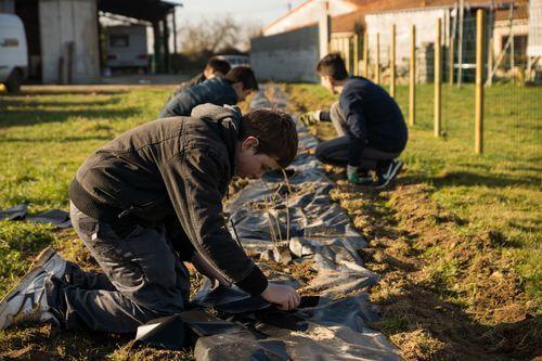 Comment planter des haies bocagères avec subventions ?