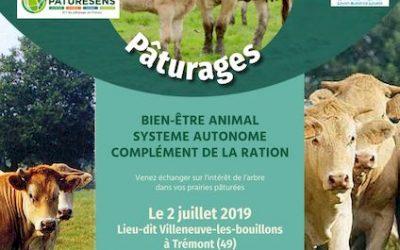 Journée technique : agroforesterie et pâturages le 2 juillet